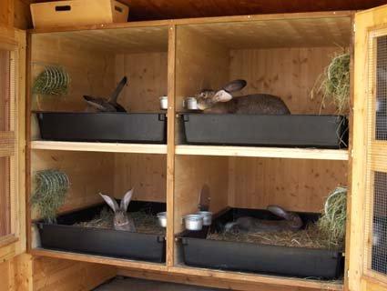 Вот так держат кроликов немцы